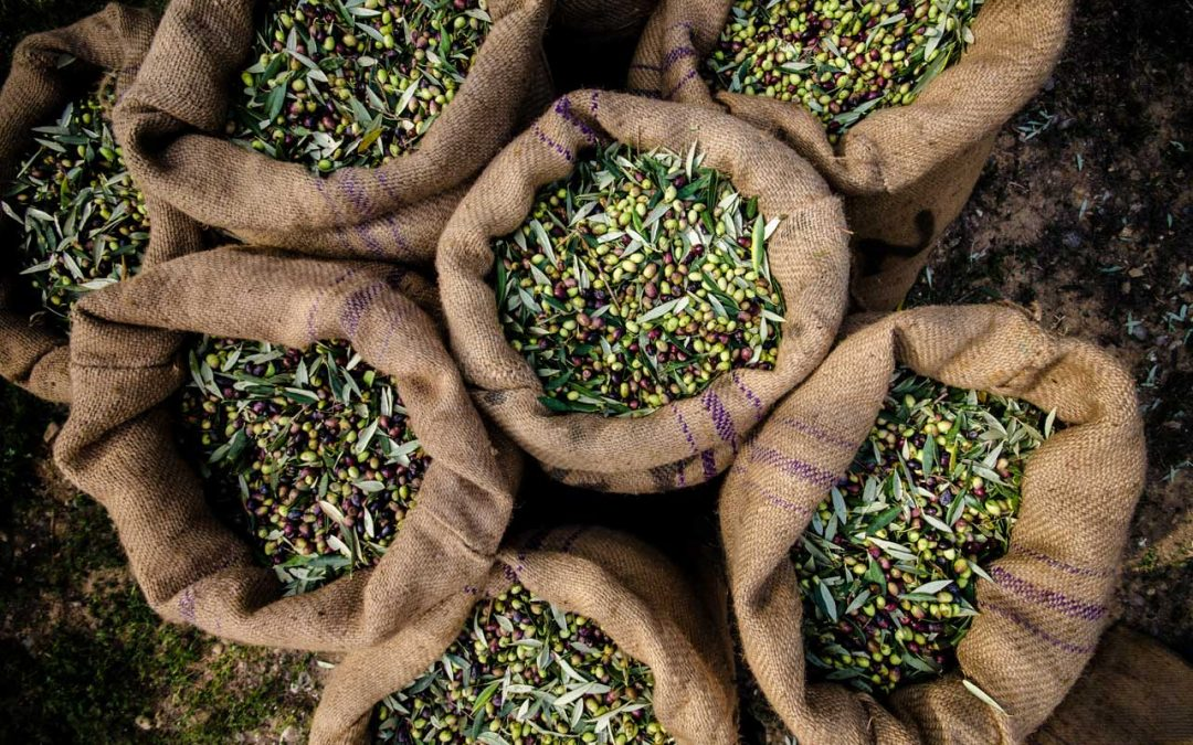 Aspiratore per olive