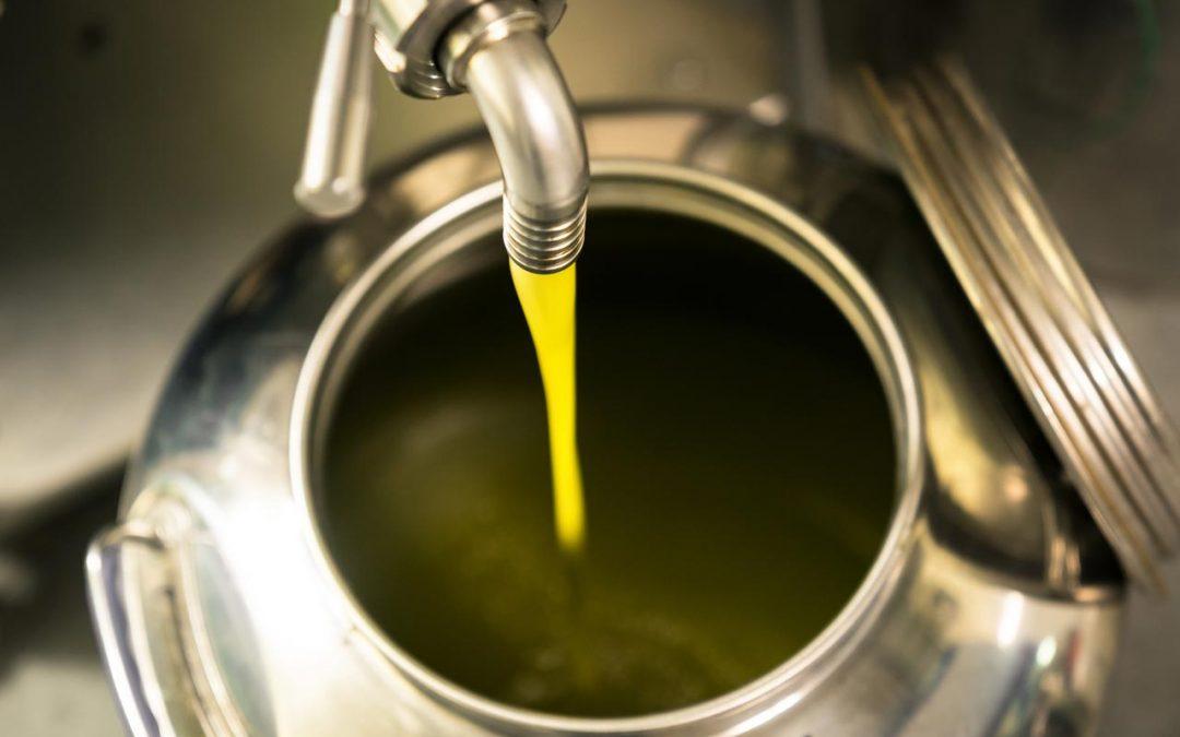 Le fasi della produzione dell'olio di oliva