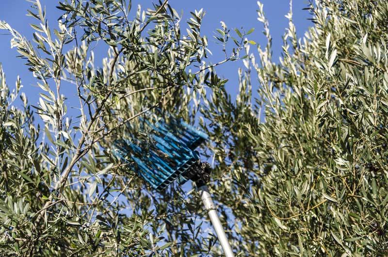 Abbacchiatori elettrici per olive