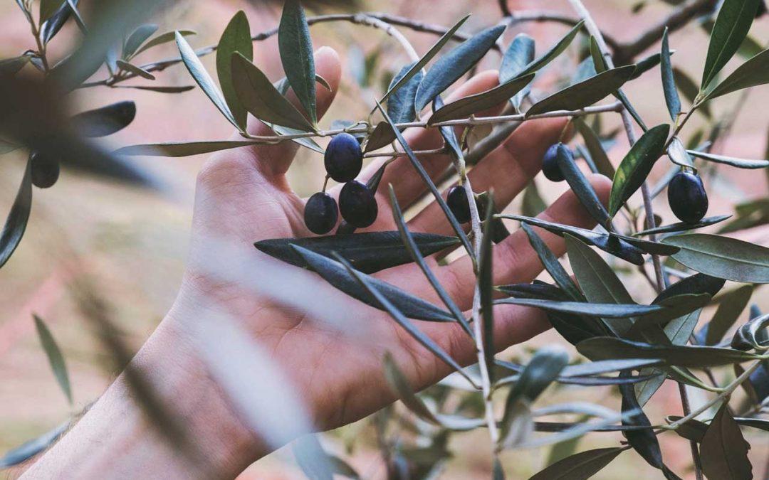 Prezzi dell'olio extravergine d'oliva