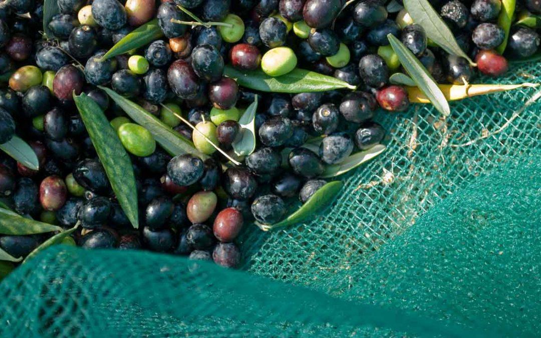 Mini frantoio per olive