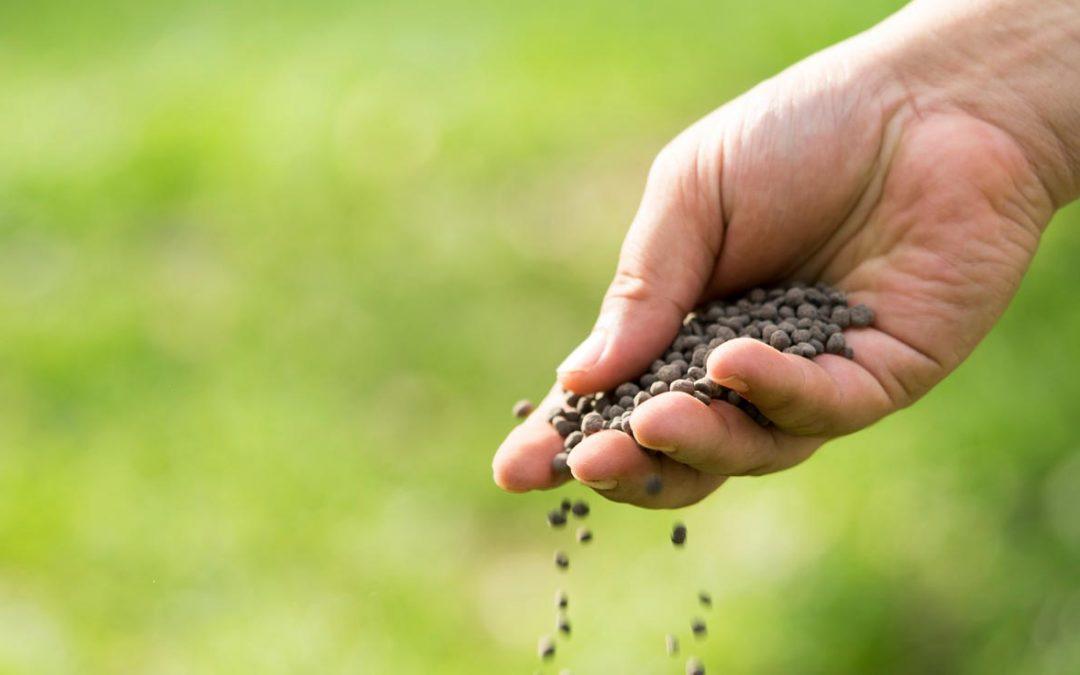 Come concimare l'ulivo