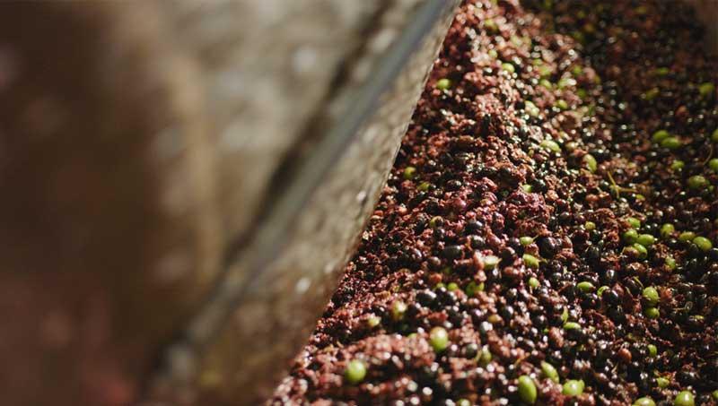 Tutte le fasi di lavorazione delle olive