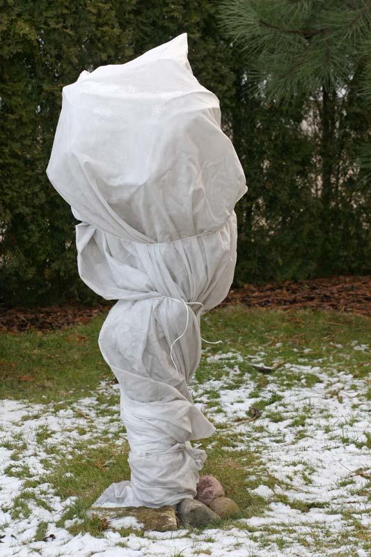 Coprire ulivi con velo da sposa