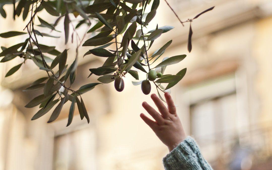 Obesità dei bambini, combatterla a tavola con l'olio di oliva