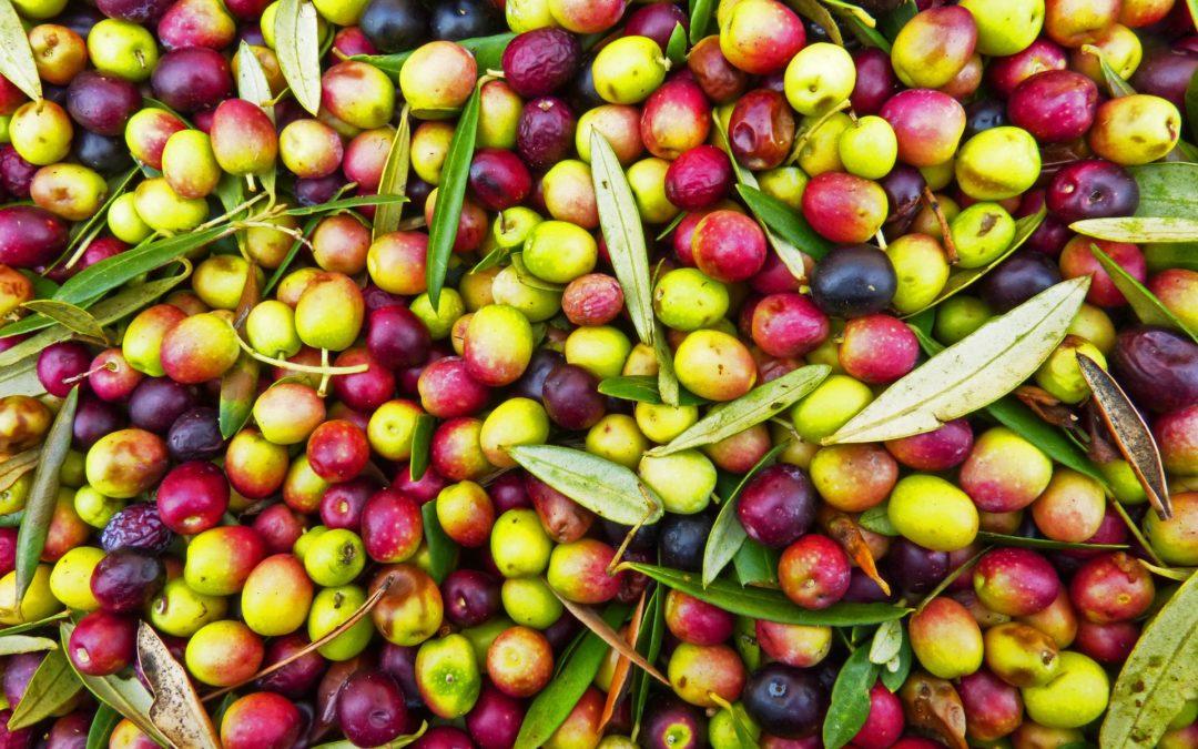 Le olive da mensa più buone e famose d'Italia